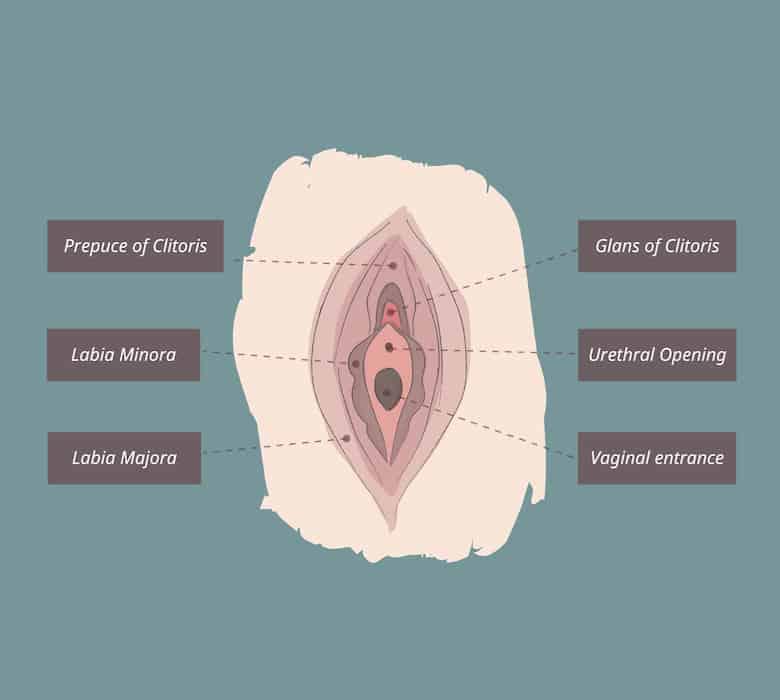 clitoris diagram